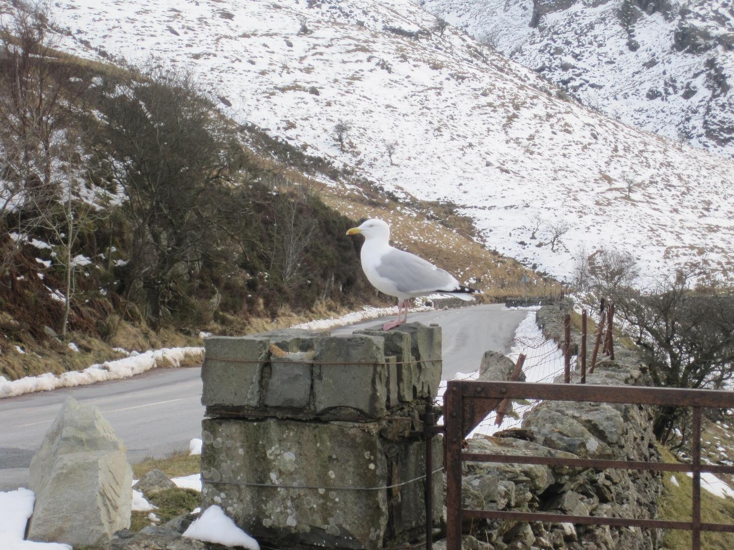 Snowdonia 28 Mar 2013 (172)