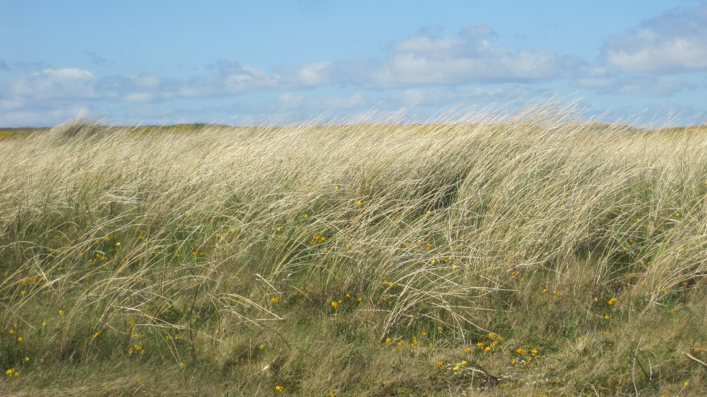 Beach and beach dunes 31 May 2013 (3)