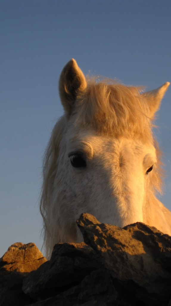 white horse 19 Feb 2013 (5)