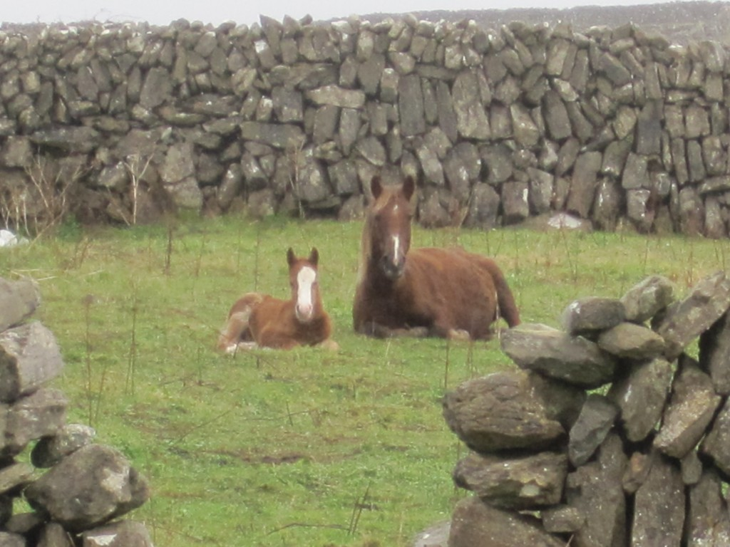 Horse and foal 17 Jan 2013 Inis Mean SMALL