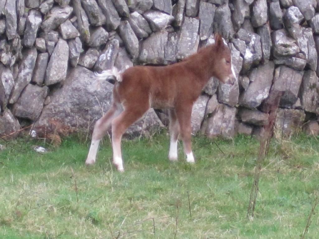 New foal 14 Jan 2013 (11)