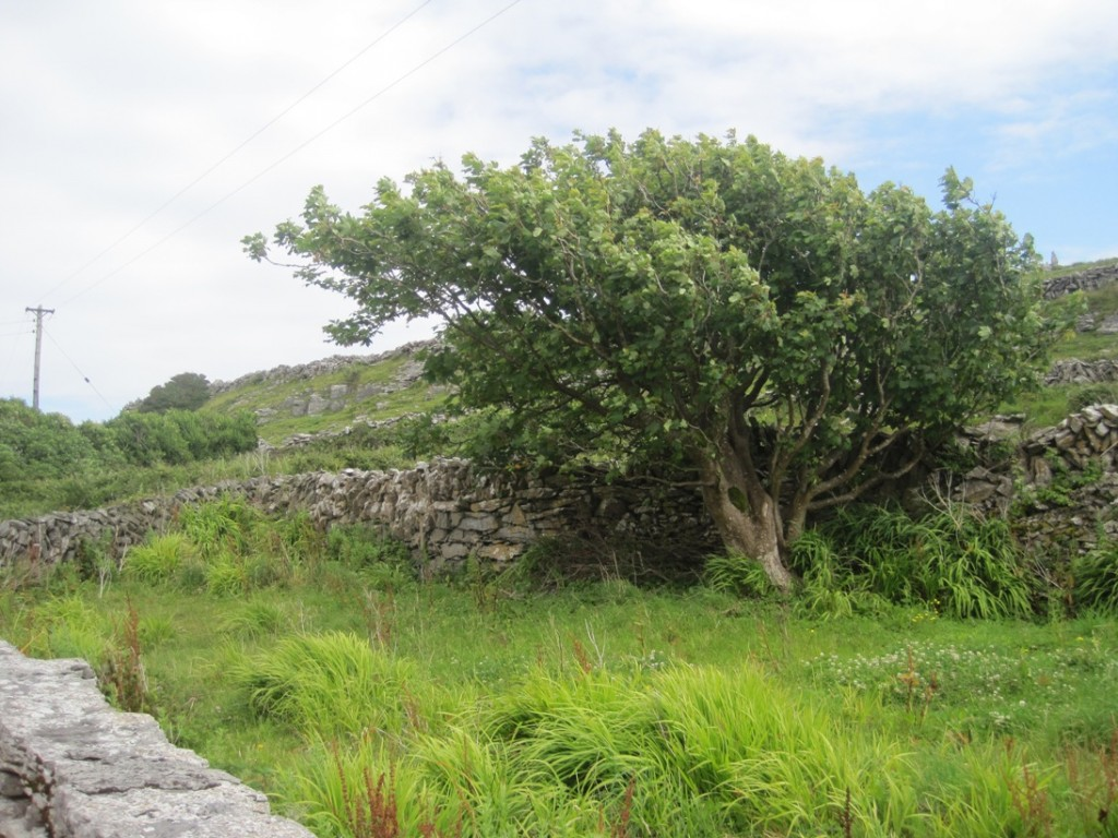 16 July 2014 Inis Meain houses (10)