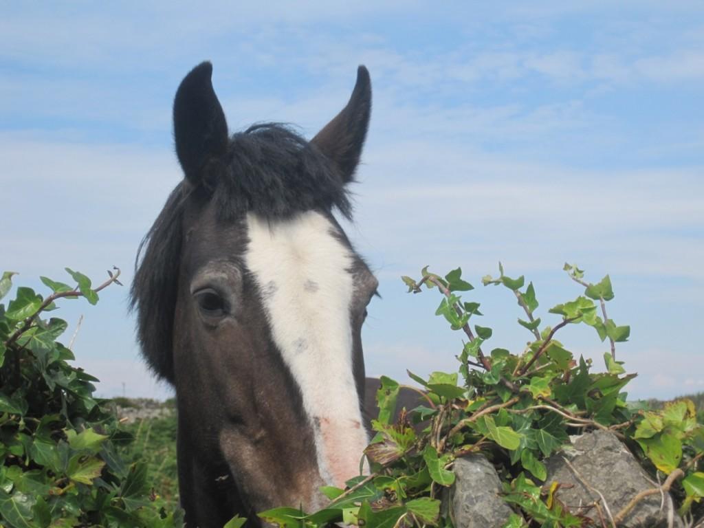 18 July 2014 Black horse (2)